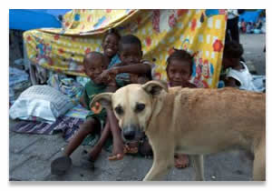 Help hounds in Haiti