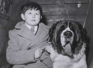 Boy with St Bernard, Crufts 1956.