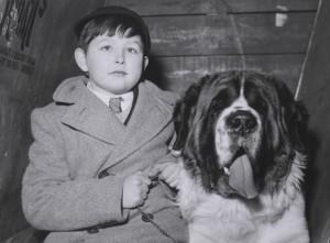 Boy with St Bernard, Crufts 1956.