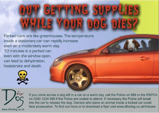 Hot dogs, hot cars - Dogs Monthly